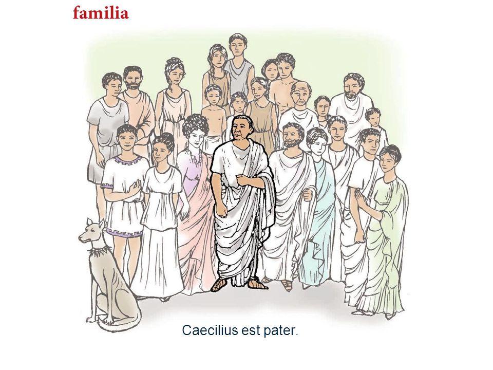 11 Caecilius est pater.