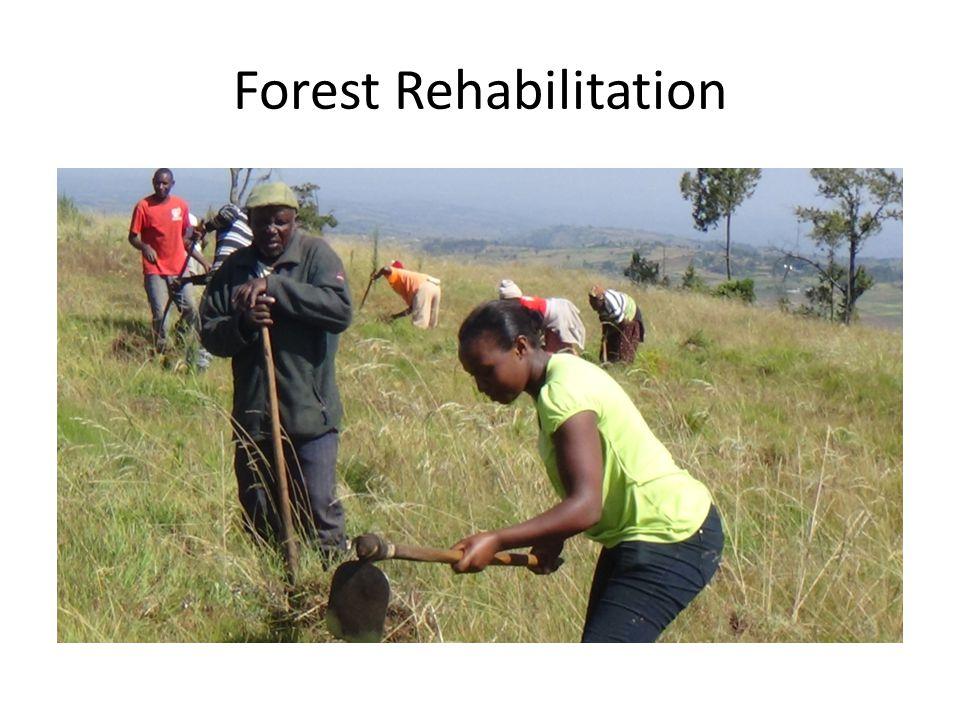 Forest Rehabilitation