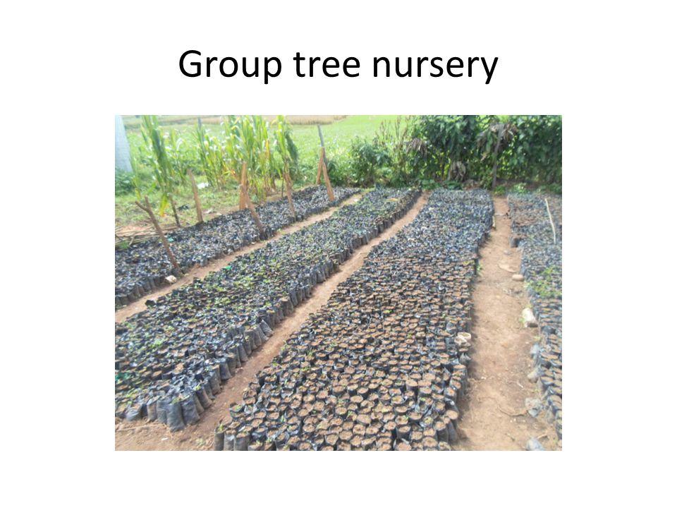 Group tree nursery