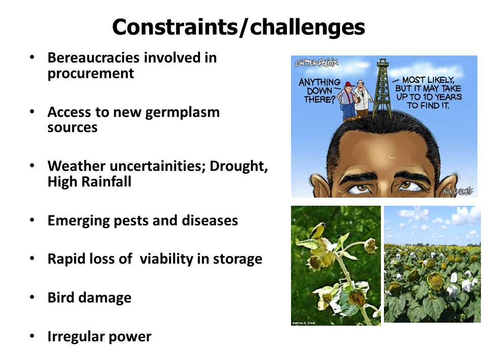 Constraints/challenges Bereaucracies involved in procurement Access to new germplasm sources Weather uncertainities; Drought, High Rainfall Emerging p