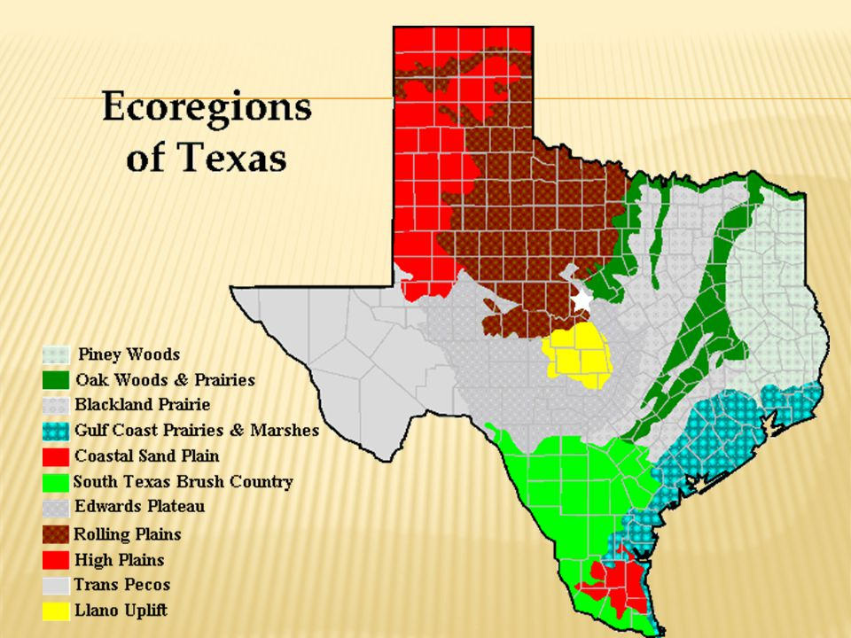  These areas have nutrient-rich soils and receive good amounts of rainfall through the year.