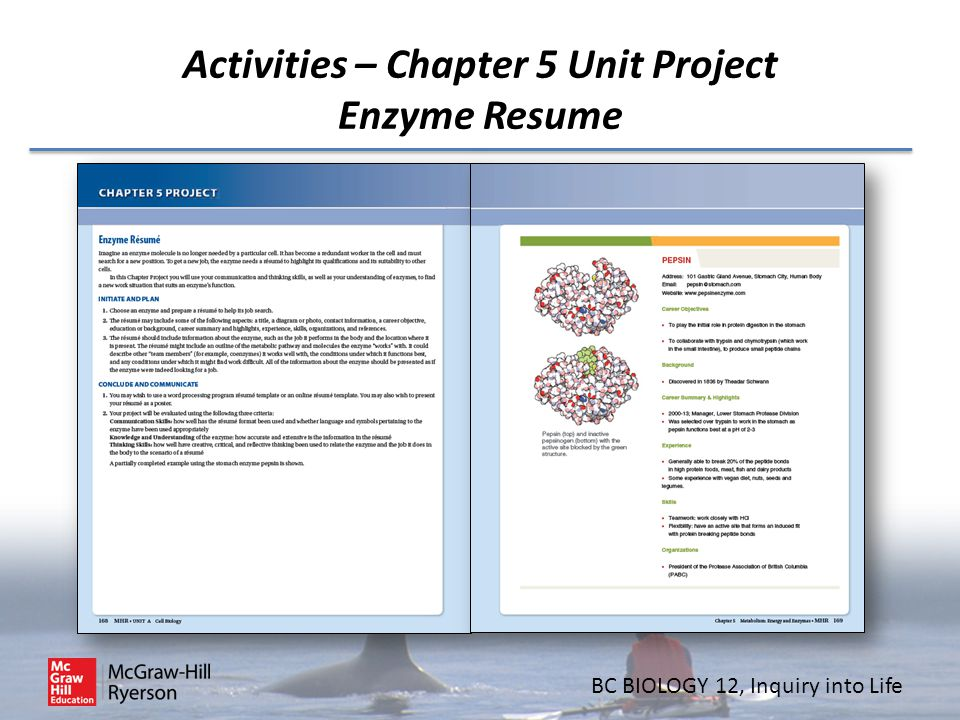 BC BIOLOGY 12, Inquiry into Life Activities – Chapter 5 Unit Project Enzyme Resume