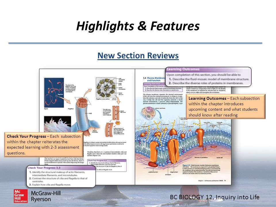 BC BIOLOGY 12, Inquiry into Life Highlights & Features New Section Reviews Learning Outcomes – Each subsection within the chapter introduces upcoming