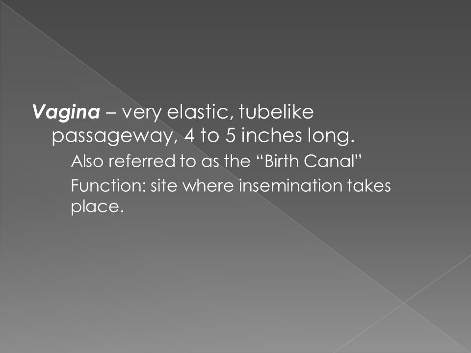 "Vagina – very elastic, tubelike passageway, 4 to 5 inches long. Also referred to as the ""Birth Canal"" Function: site where insemination takes place."