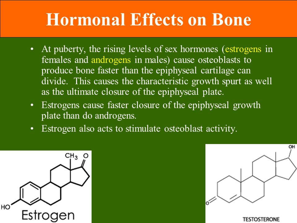 Hormonal Effects on Bone At puberty, the rising levels of sex hormones (estrogens in females and androgens in males) cause osteoblasts to produce bone