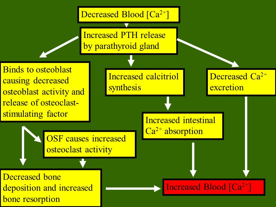 Increased PTH release by parathyroid gland Binds to osteoblast causing decreased osteoblast activity and release of osteoclast- stimulating factor OSF
