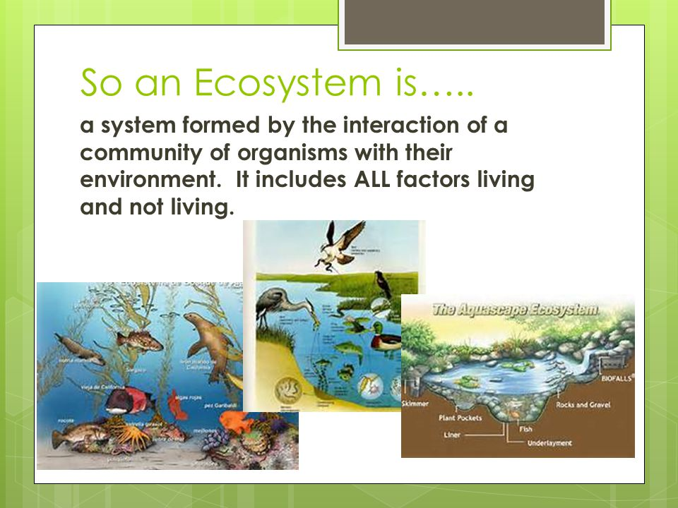 Have ecosystems changed over time? YES!