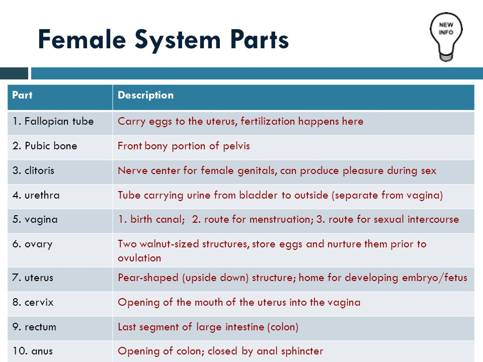 Read  Sex cells = gametes  male gamete = sperm  female gamete = egg or ovum  Genes: the special carriers of human traits Genes  Female reproductive system is entirely in pelvis  External: vulva  Internal: vagina, uterus, fallopian tubes, & ovaries