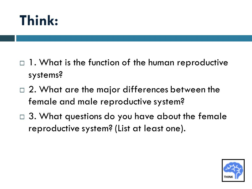 Think:  1. What is the function of the human reproductive systems?  2. What are the major differences between the female and male reproductive syste