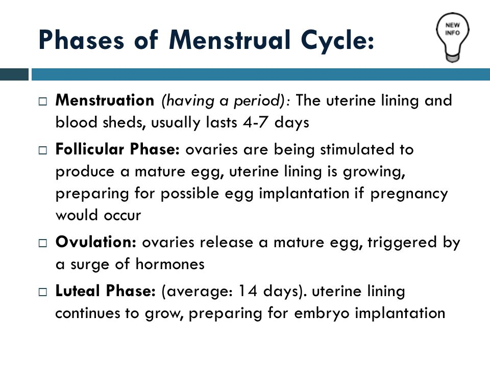 Phases of Menstrual Cycle: