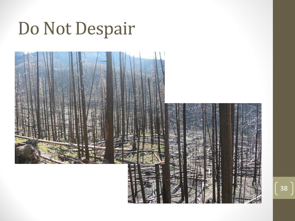 Do Not Despair 38