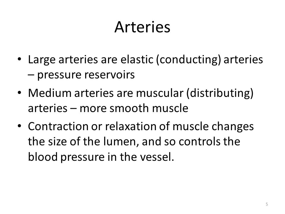 5 Arteries Large arteries are elastic (conducting) arteries – pressure reservoirs Medium arteries are muscular (distributing) arteries – more smooth muscle Contraction or relaxation of muscle changes the size of the lumen, and so controls the blood pressure in the vessel.
