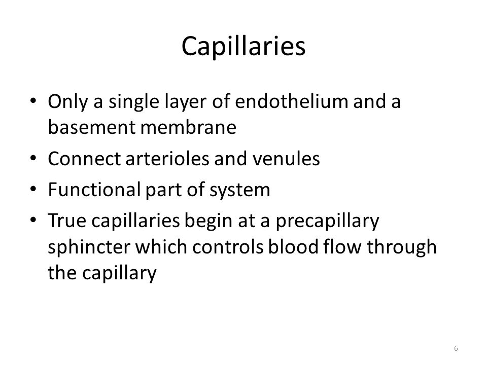 6 Capillaries Only a single layer of endothelium and a basement membrane Connect arterioles and venules Functional part of system True capillaries begin at a precapillary sphincter which controls blood flow through the capillary