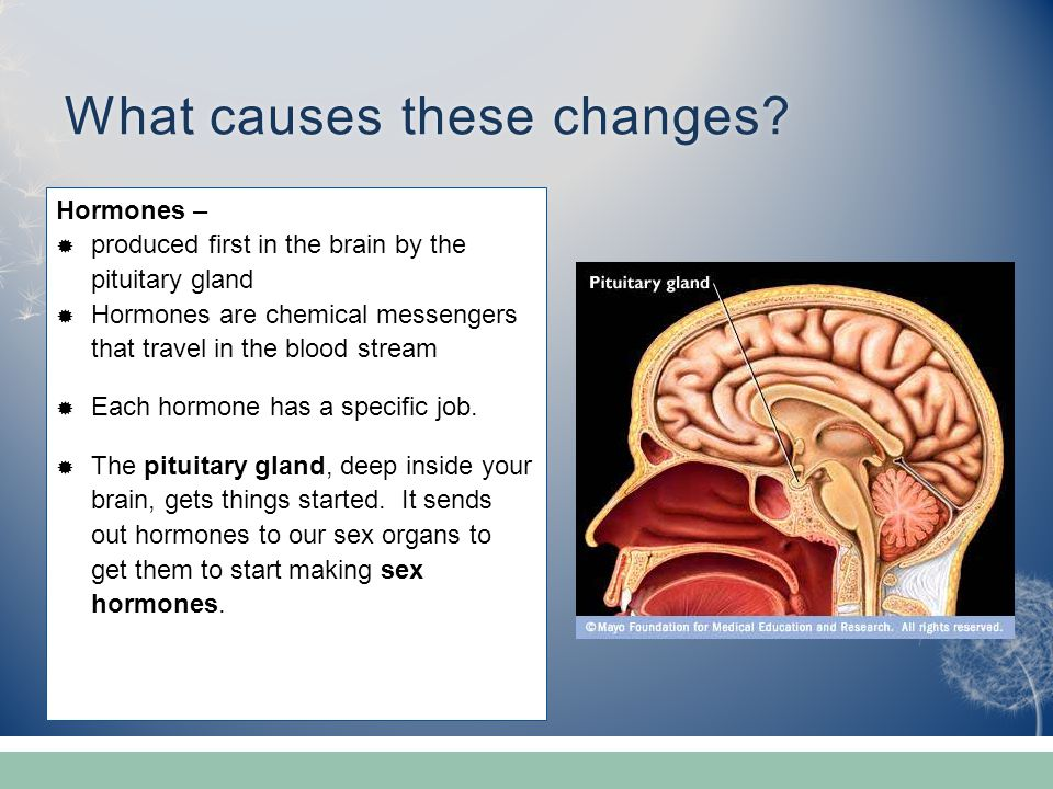 What causes these changes?What causes these changes? Hormones –  produced first in the brain by the pituitary gland  Hormones are chemical messenger