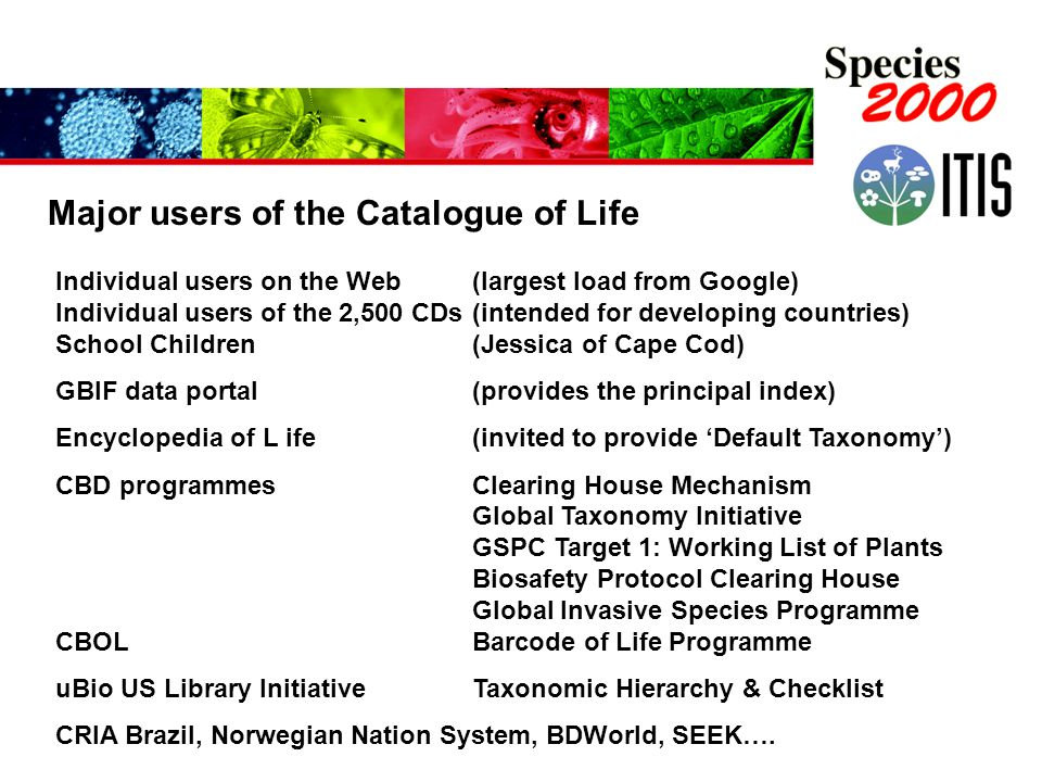 Major users of the Catalogue of Life Individual users on the Web (largest load from Google) Individual users of the 2,500 CDs(intended for developing countries) School Children(Jessica of Cape Cod) GBIF data portal (provides the principal index) Encyclopedia of L ife(invited to provide 'Default Taxonomy') CBD programmesClearing House Mechanism Global Taxonomy Initiative GSPC Target 1: Working List of Plants Biosafety Protocol Clearing House Global Invasive Species Programme CBOLBarcode of Life Programme uBio US Library Initiative Taxonomic Hierarchy & Checklist CRIA Brazil, Norwegian Nation System, BDWorld, SEEK….