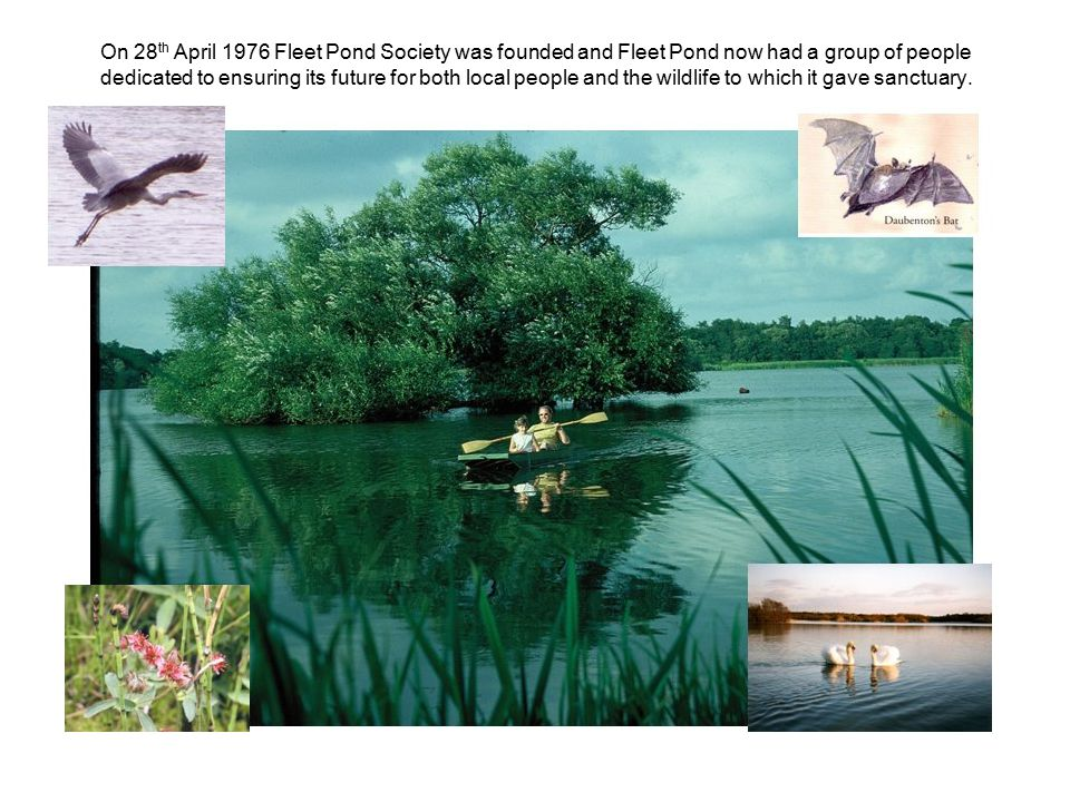 On 28 th April 1976 Fleet Pond Society was founded and Fleet Pond now had a group of people dedicated to ensuring its future for both local people and the wildlife to which it gave sanctuary.