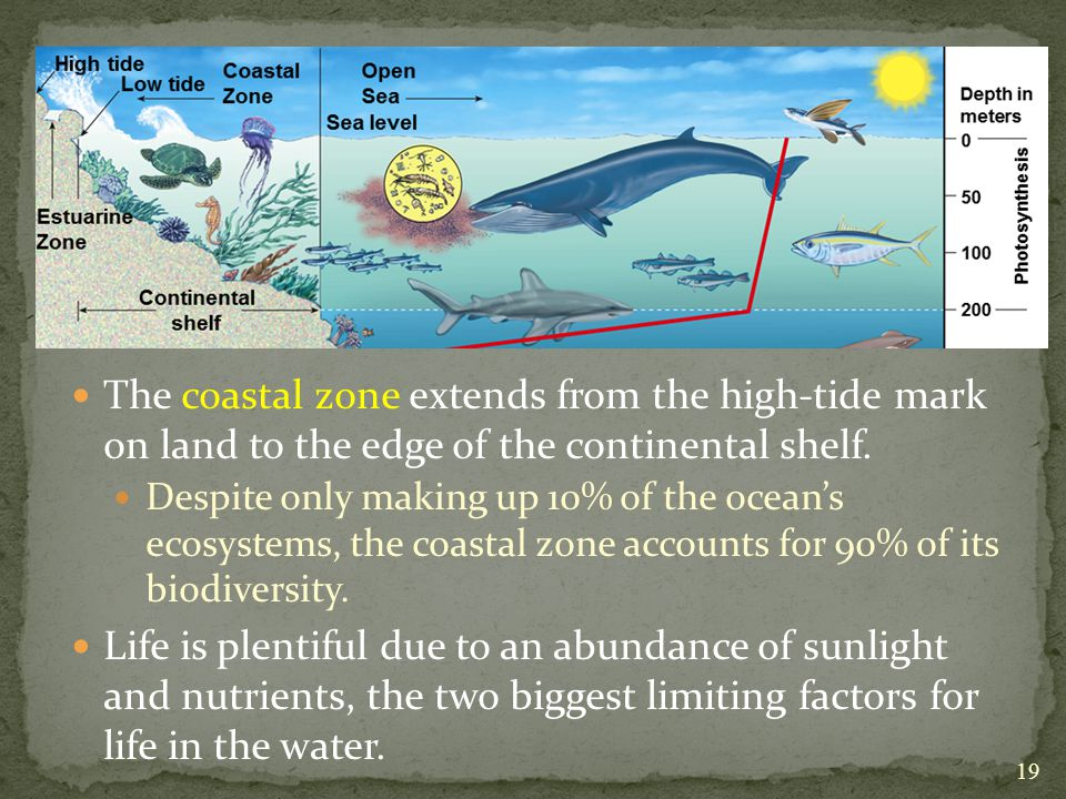 The coastal zone extends from the high-tide mark on land to the edge of the continental shelf.