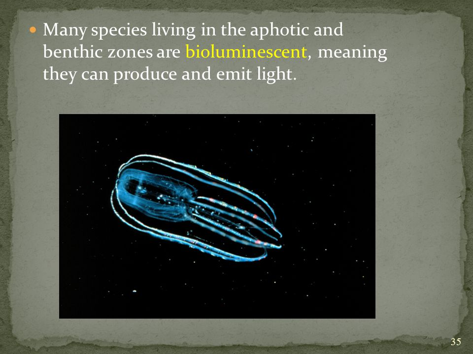 Many species living in the aphotic and benthic zones are bioluminescent, meaning they can produce and emit light.