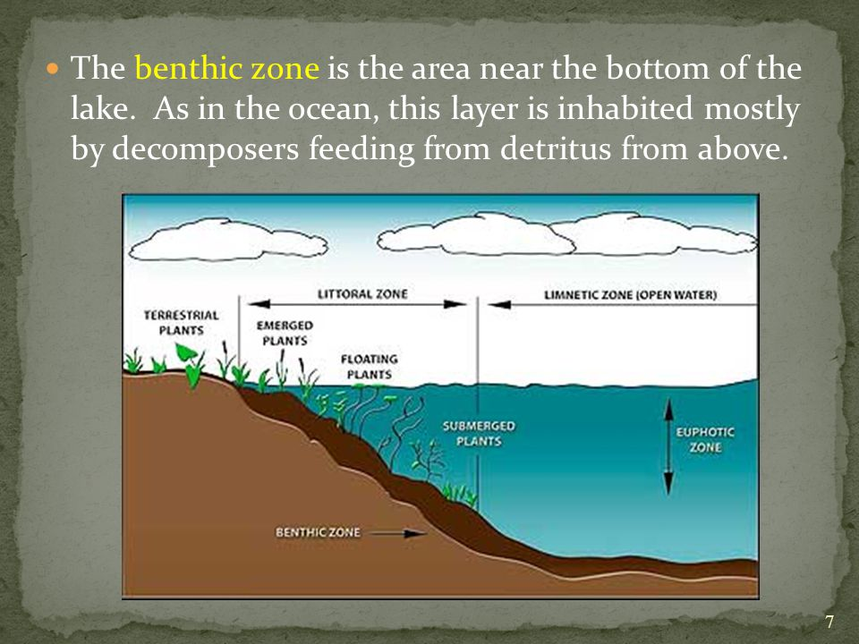 The benthic zone is the area near the bottom of the lake.