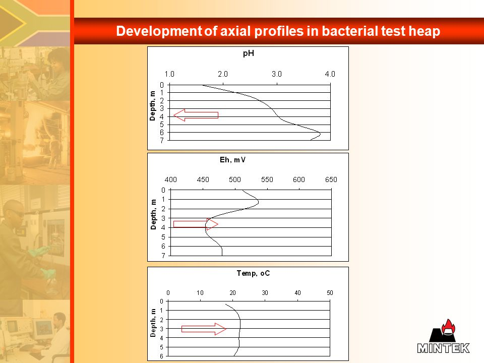 Development of axial profiles in bacterial test heap