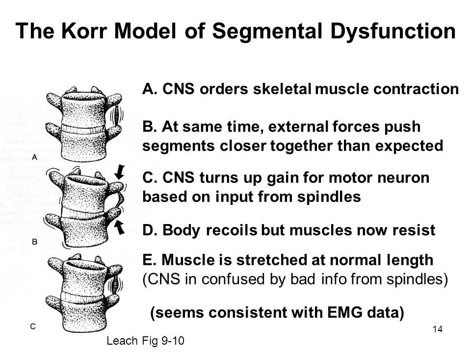 14 The Korr Model of Segmental Dysfunction Leach Fig 9-10 A.