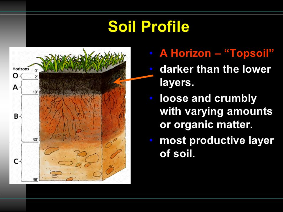 """Soil Profile A Horizon – """"Topsoil"""" darker than the lower layers. loose and crumbly with varying amounts or organic matter. most productive layer of so"""