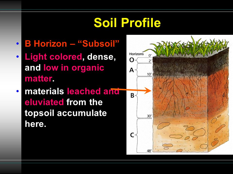 """Soil Profile B Horizon – """"Subsoil"""" Light colored, dense, and low in organic matter. materials leached and eluviated from the topsoil accumulate here."""