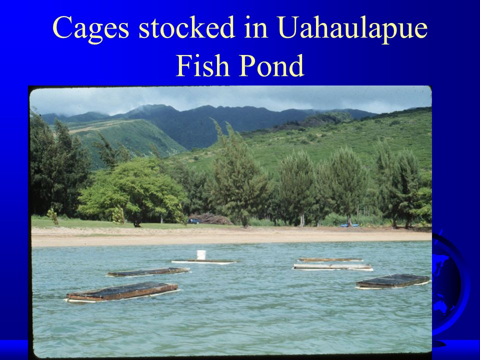 Cages stocked in Uahaulapue Fish Pond