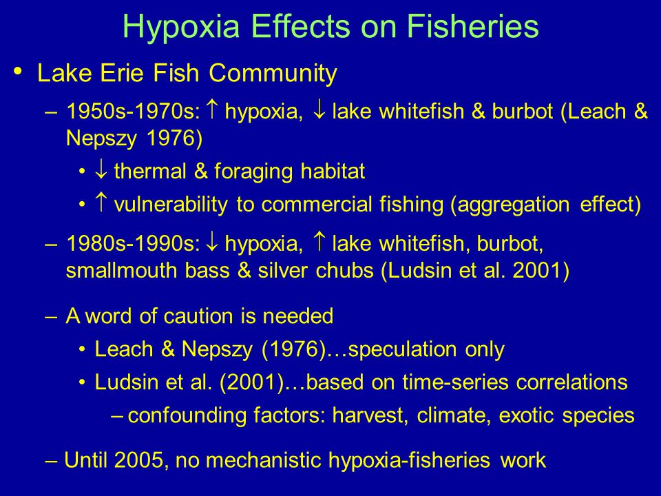 Lake Erie Fish Community Hypoxia Effects on Fisheries –1950s-1970s:  hypoxia,  lake whitefish & burbot (Leach & Nepszy 1976)  thermal & foraging habitat  vulnerability to commercial fishing (aggregation effect) –1980s-1990s:  hypoxia,  lake whitefish, burbot, smallmouth bass & silver chubs (Ludsin et al.