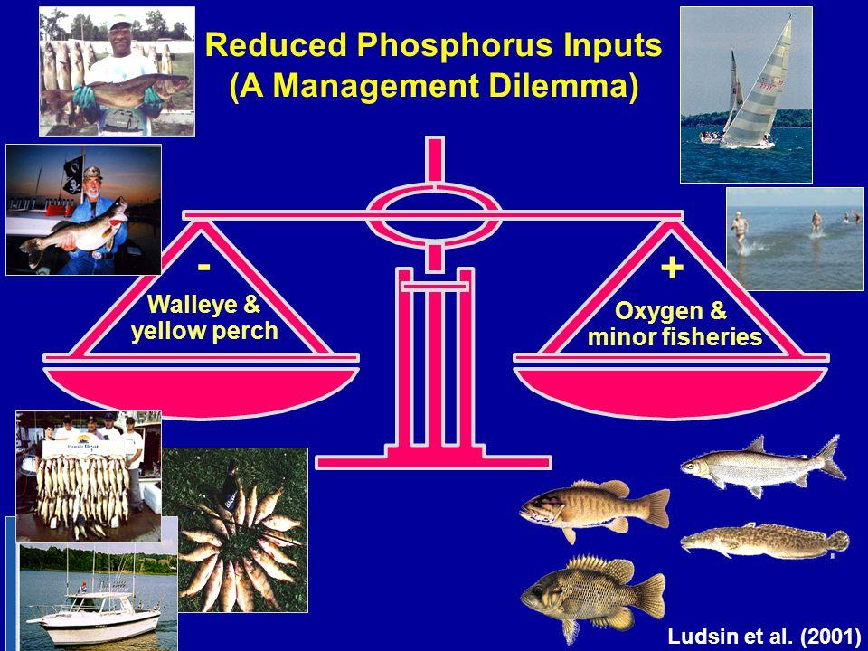 Reduced Phosphorus Inputs (A Management Dilemma) Oxygen & minor fisheries + Walleye & yellow perch - Ludsin et al. (2001)