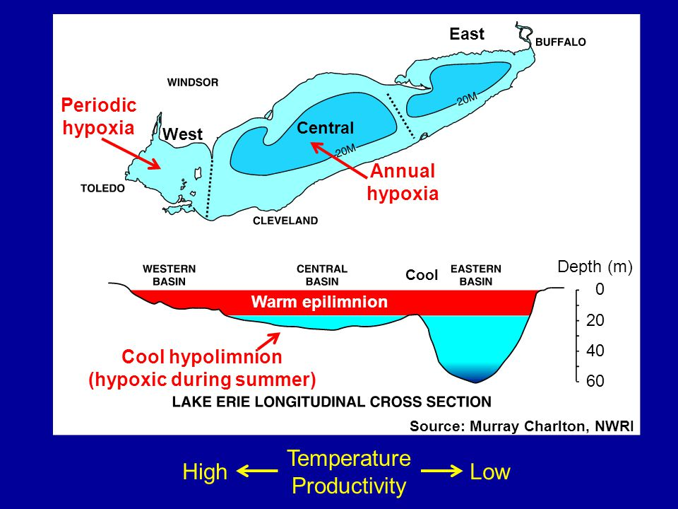 Warm epilimnion West Central East Cool Source: Murray Charlton, NWRI Cool hypolimnion (hypoxic during summer) Periodic hypoxia Temperature Productivity HighLow Annual hypoxia Depth (m) 0 20 40 60
