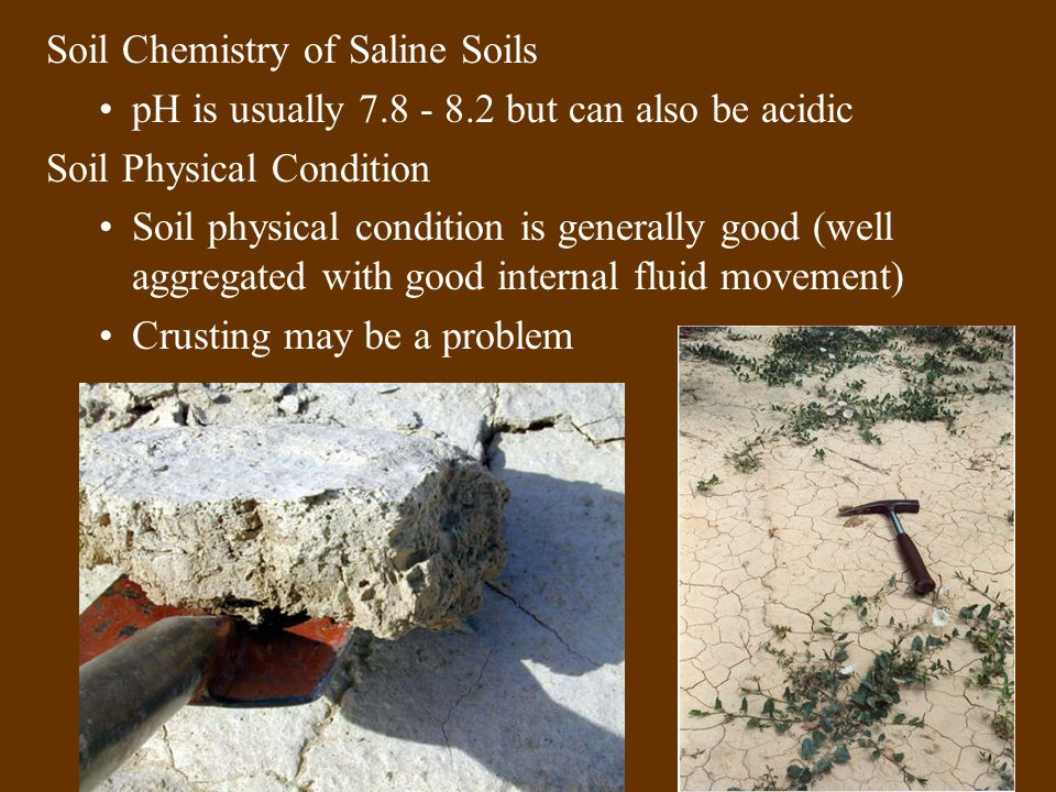 Soil Chemistry of Saline Soils pH is usually 7.8 - 8.2 but can also be acidic Soil Physical Condition Soil physical condition is generally good (well aggregated with good internal fluid movement) Crusting may be a problem