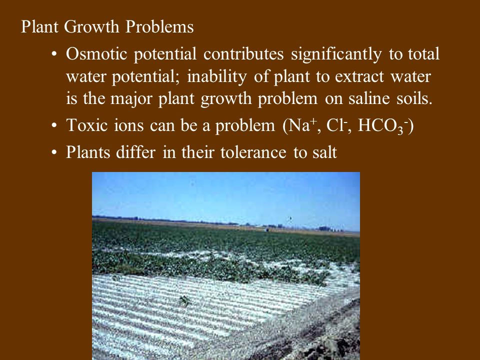 Plant Growth Problems Osmotic potential contributes significantly to total water potential; inability of plant to extract water is the major plant growth problem on saline soils.