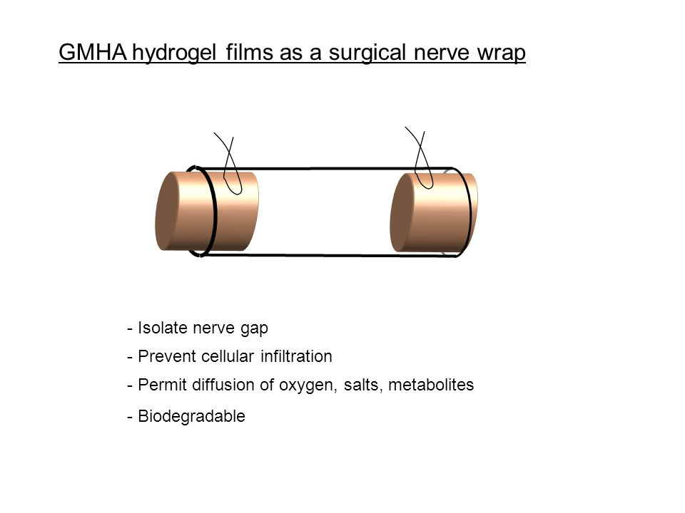 GMHA hydrogel films as a surgical nerve wrap - Prevent cellular infiltration - Permit diffusion of oxygen, salts, metabolites - Biodegradable - Isolate nerve gap