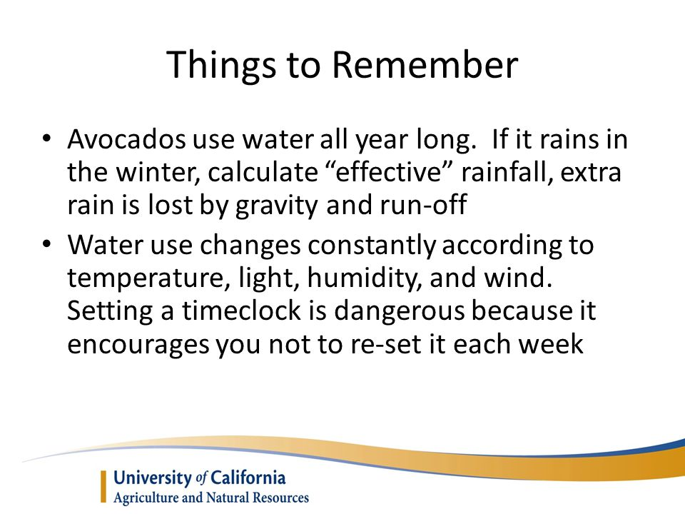 Things to Remember Avocados use water all year long.