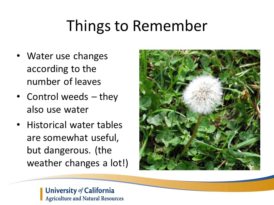 Things to Remember Water use changes according to the number of leaves Control weeds – they also use water Historical water tables are somewhat useful, but dangerous.