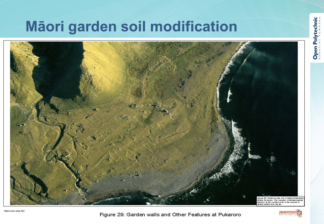 Māori garden soil modification Proin at eros non eros adipiscing mollis.