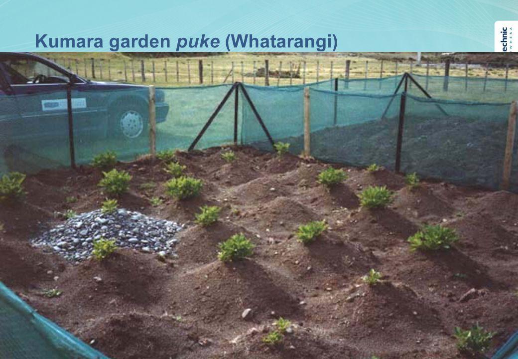 Kumara garden puke (Whatarangi)