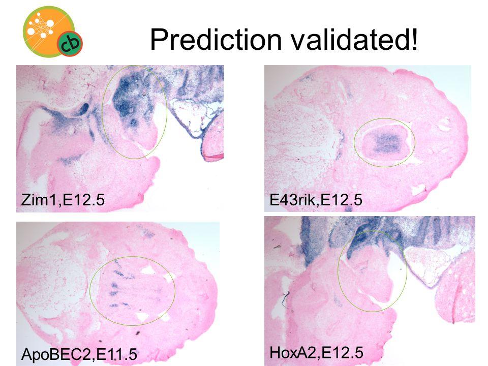 Prediction validated! HoxA2,E12.5 ApoBEC2,E11.5 Zim1,E12.5E43rik,E12.5