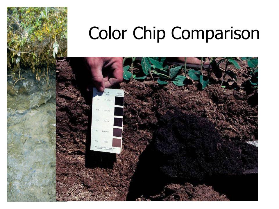 Color Chip Comparison