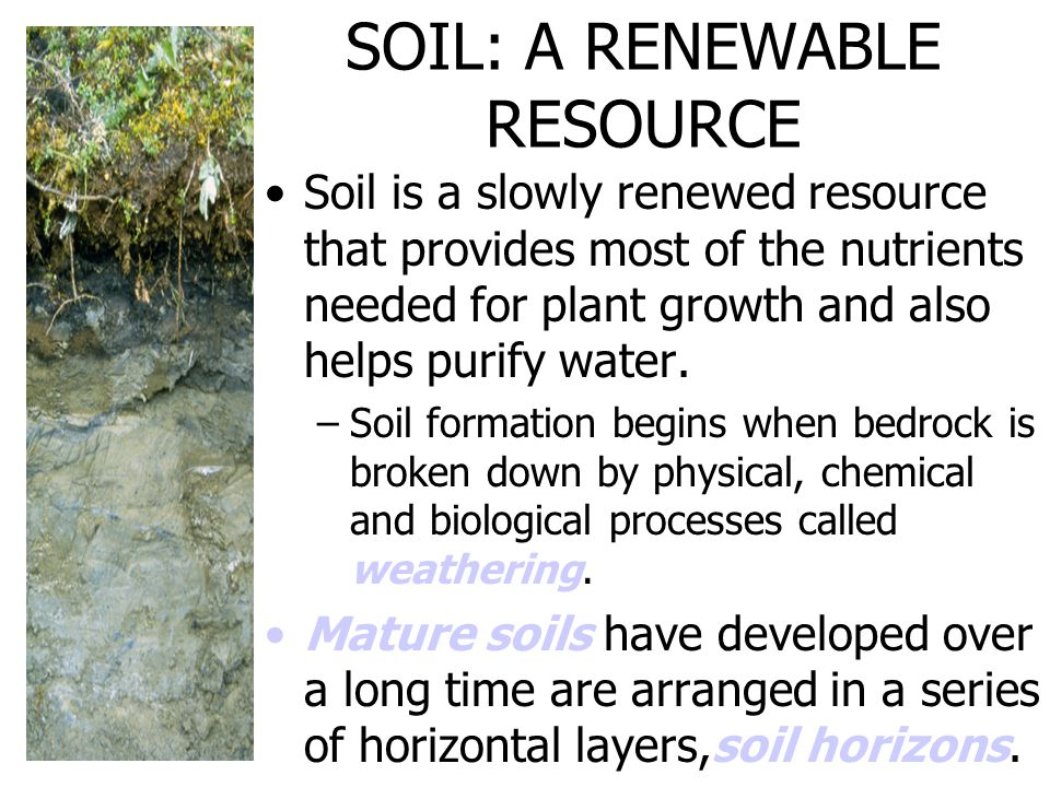SOIL: A RENEWABLE RESOURCE Soil is a slowly renewed resource that provides most of the nutrients needed for plant growth and also helps purify water.