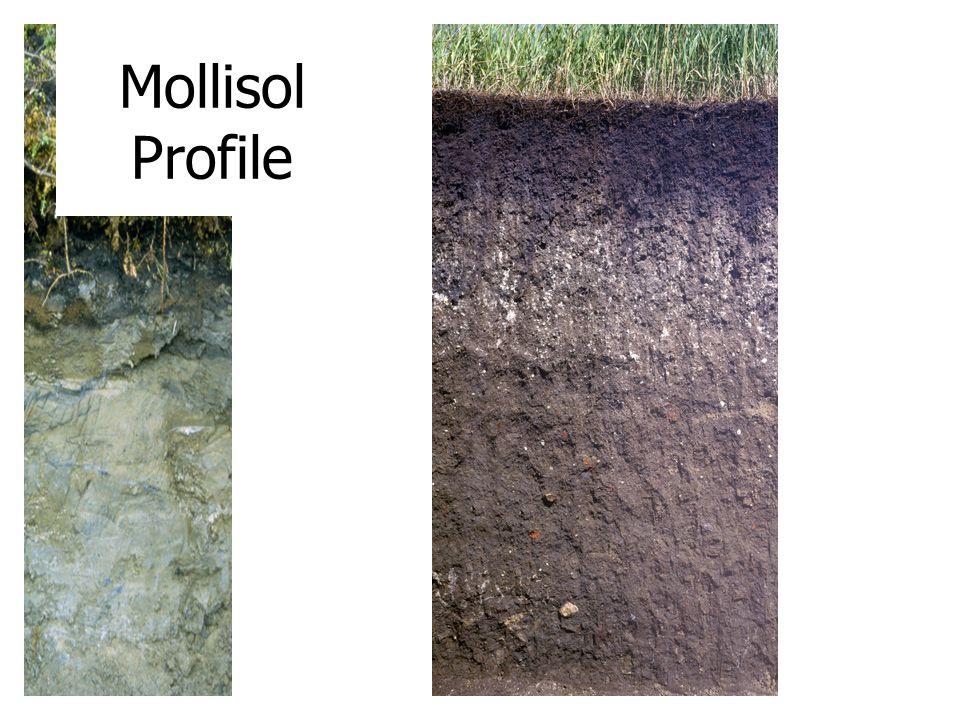 Mollisol Profile