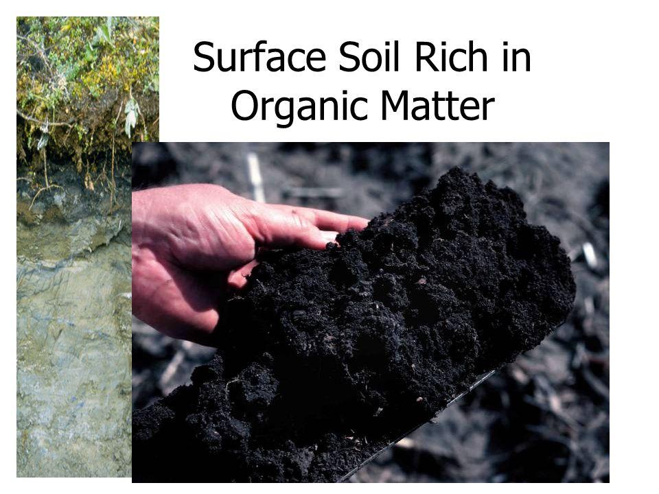 Surface Soil Rich in Organic Matter
