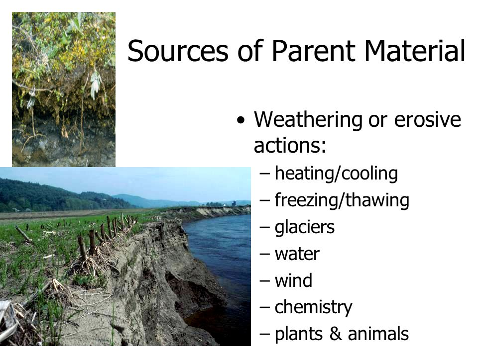 Sources of Parent Material Weathering or erosive actions: –heating/cooling –freezing/thawing –glaciers –water –wind –chemistry –plants & animals