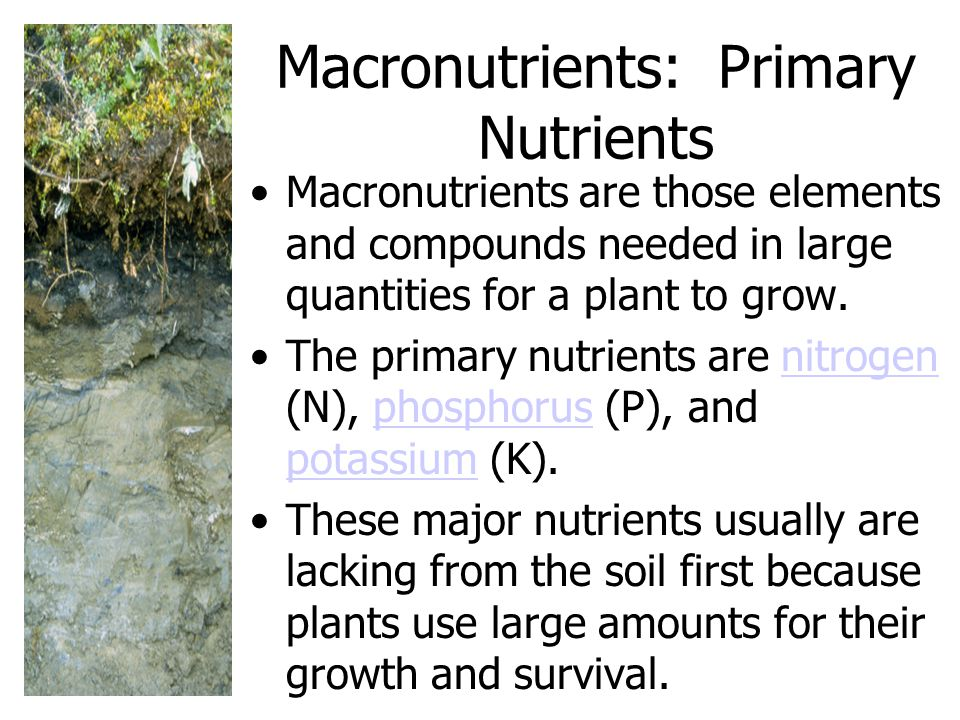 Macronutrients: Primary Nutrients Macronutrients are those elements and compounds needed in large quantities for a plant to grow.