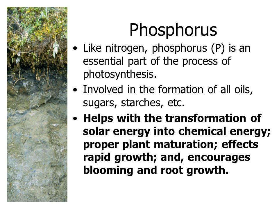 Phosphorus Like nitrogen, phosphorus (P) is an essential part of the process of photosynthesis.