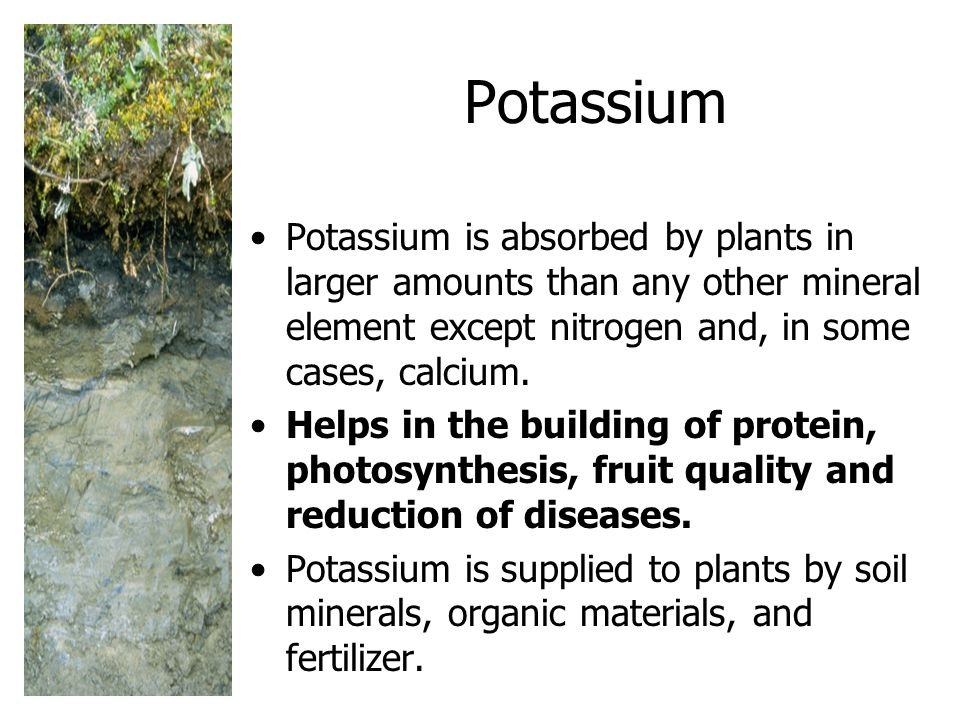 Potassium Potassium is absorbed by plants in larger amounts than any other mineral element except nitrogen and, in some cases, calcium.