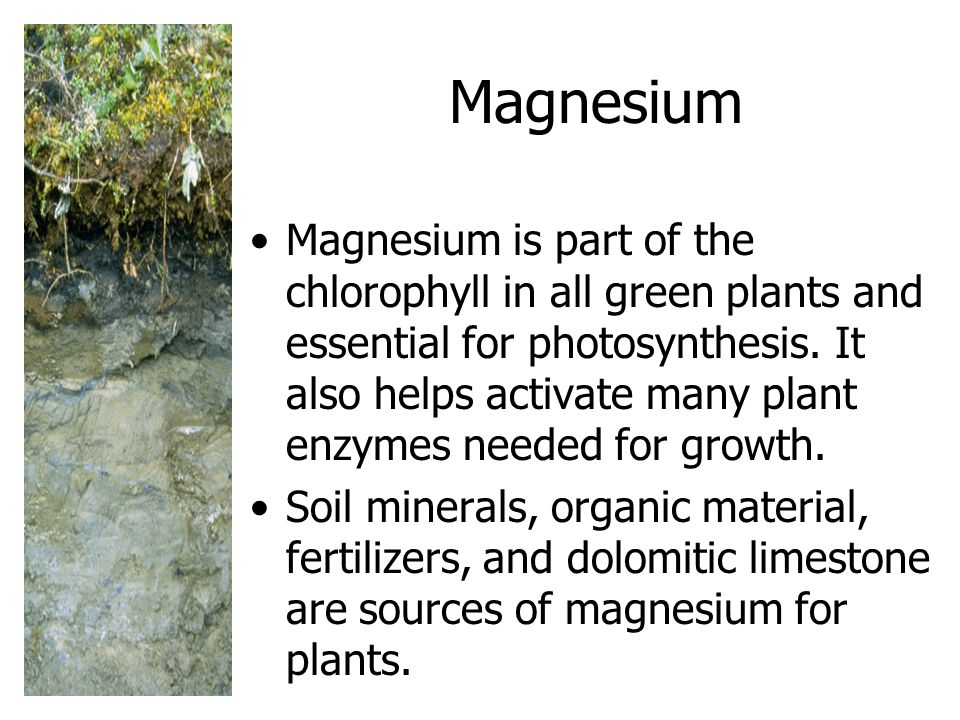 Magnesium Magnesium is part of the chlorophyll in all green plants and essential for photosynthesis.