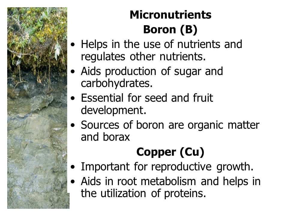 Micronutrients Boron (B) Helps in the use of nutrients and regulates other nutrients.
