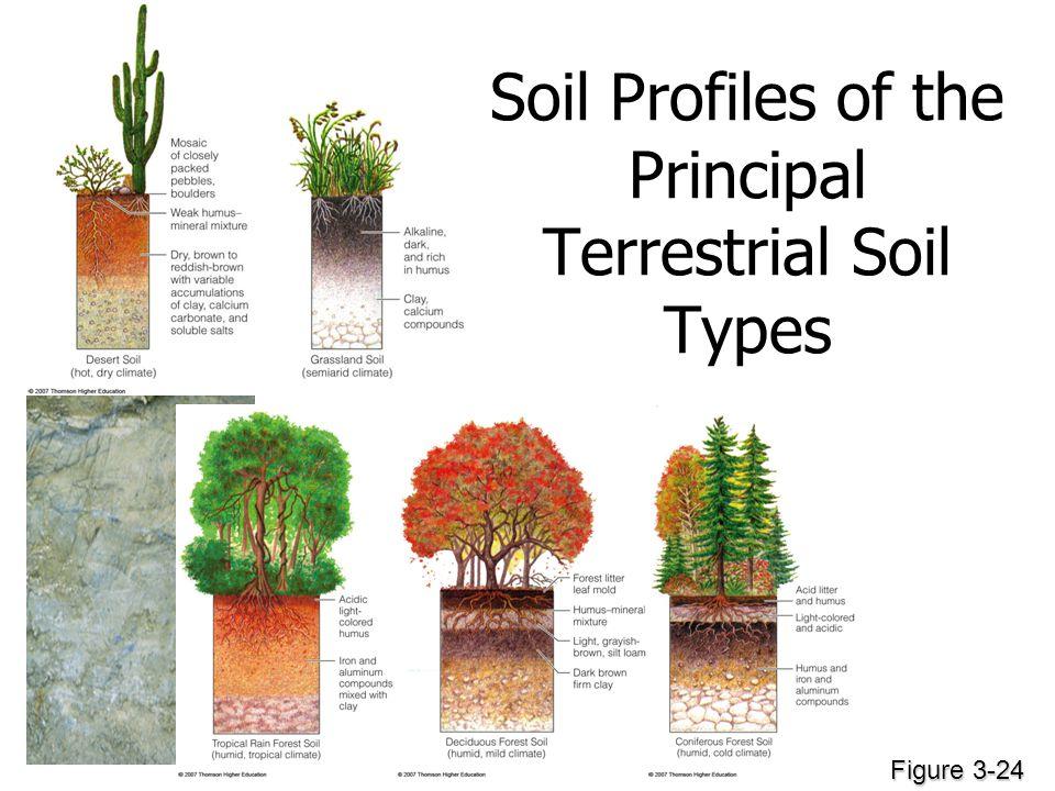 Soil Profiles of the Principal Terrestrial Soil Types Figure 3-24